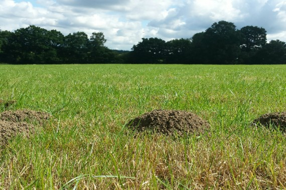 mole catcher in Guildford